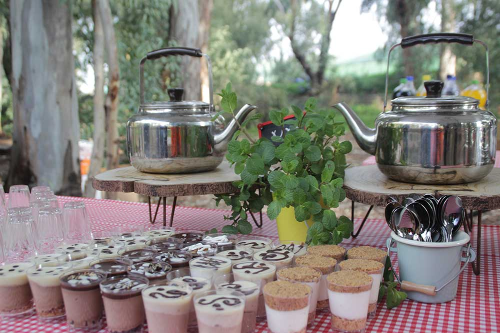 להרגע על כוס קפה או תה במתתחם יער בראשית